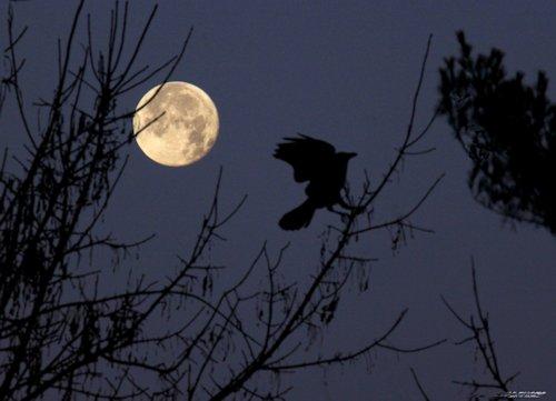 mooncrow_0159